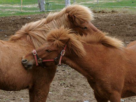 رمزيات خيول (1)