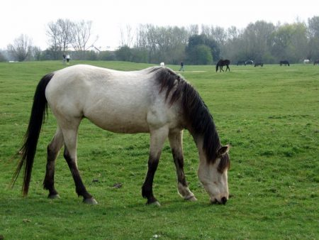 صور خيول بجودة hd (3)