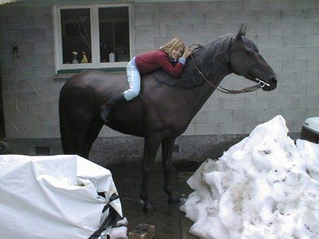 صور خيول (3)