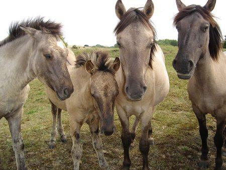 صور رمزية للخيول (1)