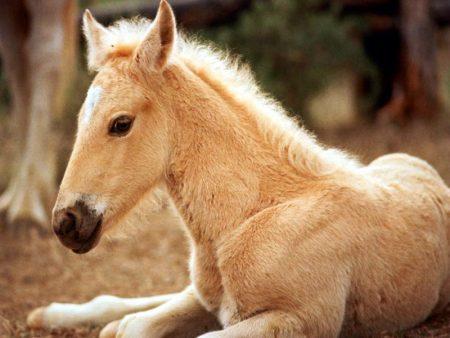 صور رمزية للخيول (2)