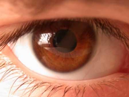 لون عيون عسلي بالصور (3)