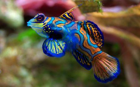 اجمل الوان السمك (1)