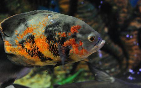 اجمل الوان السمك (2)
