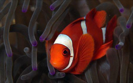 اجمل الوان السمك (3)