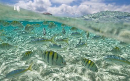 اجمل سمك (1)