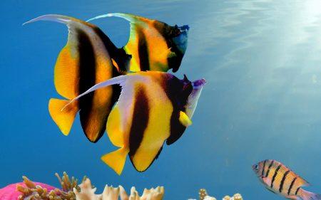 اجمل سمك (2)