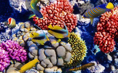 احلي صور سمك في العالم (1)