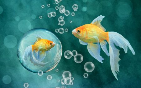 احلي صور سمك في العالم (2)