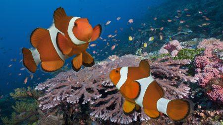 احلي صور سمك في العالم (3)