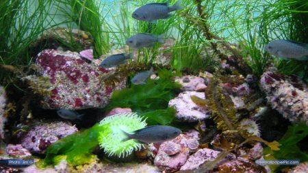 خلفيات سمك جديدة hd (1)