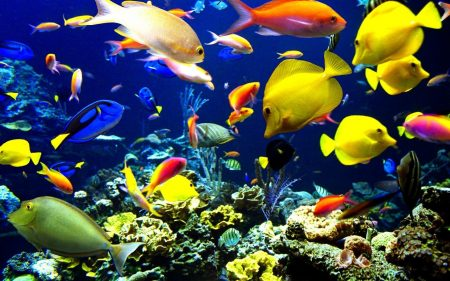 صور اجمل الاسماك البحرية في العالم خلفيات HD - ميكساتك