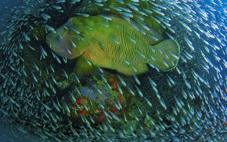 خلفيات سمك 2017 (1)