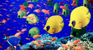 خلفيات سمك 2017 (2)