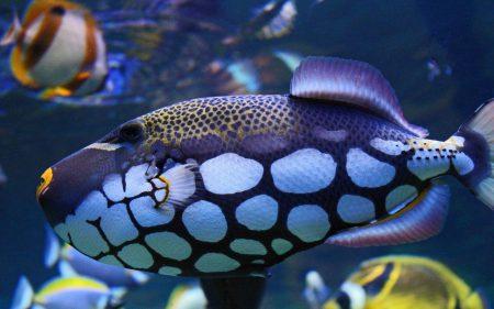 خلفيات سمك 2017 (3)