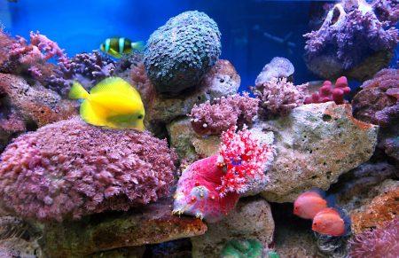 سمك ملون (3)