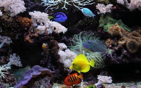صور اجمل اسماك العالم (2)