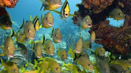 صور اجمل اسماك العالم (3)
