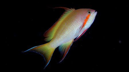صور اجمل الاسماك البحرية في العالم خلفيات HD (1)