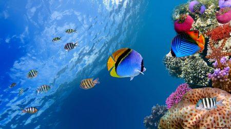 صور اجمل الاسماك البحرية في العالم خلفيات HD (2)
