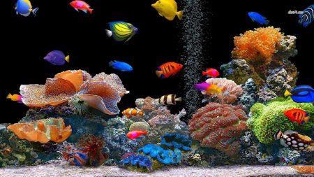 صور اجمل الاسماك البحرية في العالم خلفيات HD (3)