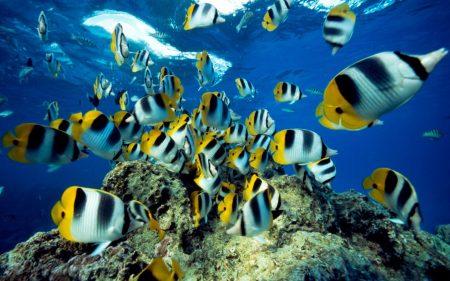 صور اجمل الاسماك البحرية في العالم خلفيات HD (4)