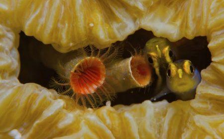 صور سمك جميل (1)