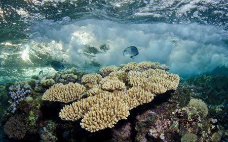 صور سمك جميل (2)