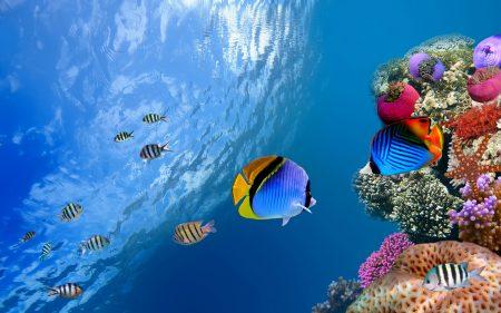 fish (2)