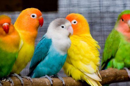 اجمل الطيور بالصور رمزيات وخلفيات صور طيور (1)