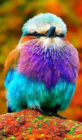اجمل الطيور بالصور رمزيات وخلفيات صور طيور (3)