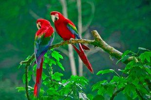 اجمل الطيور في العالم (1)