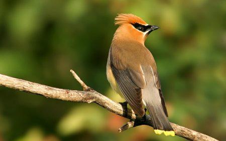 اجمل الطيور في العالم (2)