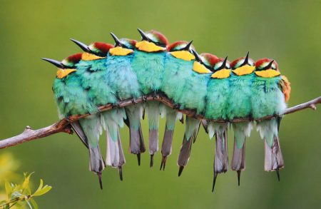 اجمل الطيور (1)