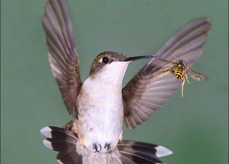 اجمل الطيور (2)