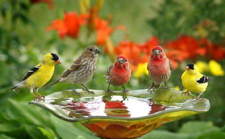 اجمل الطيور (3)