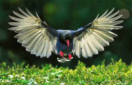 اجمل صور الطيور (1)