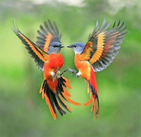 اجمل صور الطيور (2)