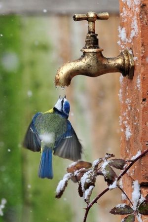 اجمل صور الطيور (3)