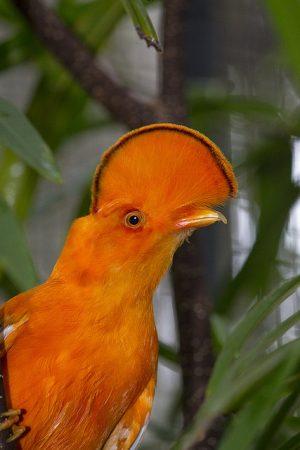 احلى طيور (3)