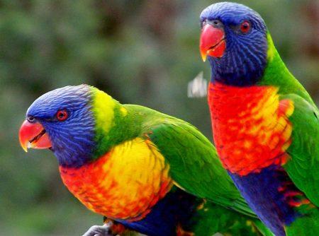 رمزيات طيور (1)