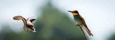 رمزيات طيور (2)