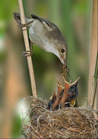 رمزيات طيور (3)