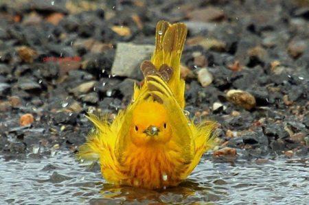 رمزيات وخلفيات طيور (2)