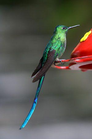رمزيات وخلفيات طيور (3)