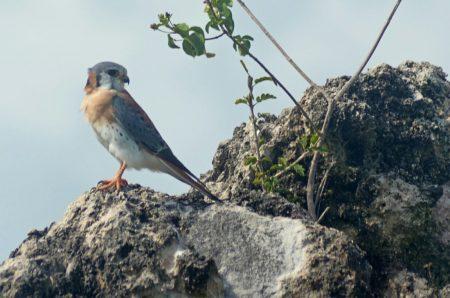 صور اجمل الطيور (1)