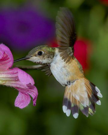 صور اجمل الطيور (2)