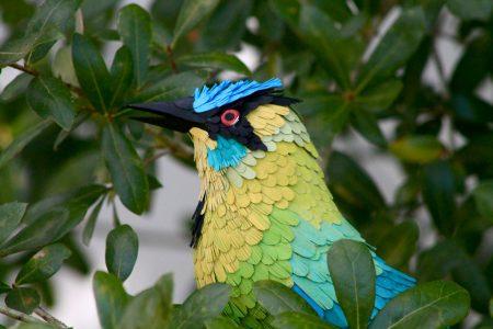 صور اجمل الطيور (3)