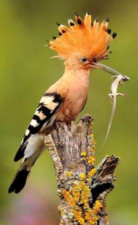 صور طير رمزيات وخلفيات احلي طيور (1)