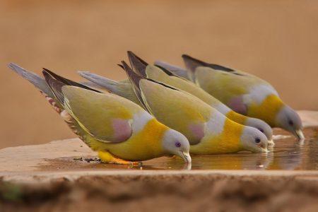 صور طير رمزيات وخلفيات احلي طيور (2)